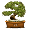 Bonsai Award
